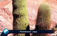 ► PURMAMARCA & HUMAHUACA