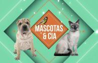 Riesgos para las mascotas en el hogar