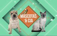 Mascotas & Cia: Vacunación de perro y gatos