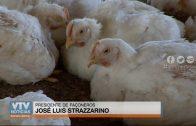 Ministerio de Ganadería quitó habilitación a 8 granjas avícolas por un problema nutricional