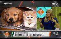 Mascotas & Cía – El frío y el cuidado de las mascotas
