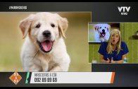Mascotas & Cia – Problemas más frecuentes en los ojos