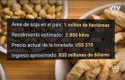 Agro: Buen rendimiento de la cosecha de Soja